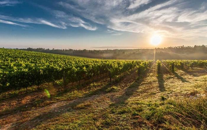 disfrutar del vino y la enología en Semana Santa